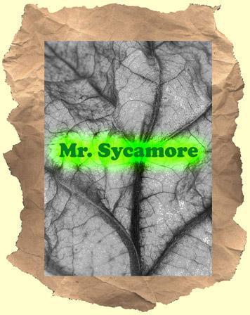 mr sycamore 1